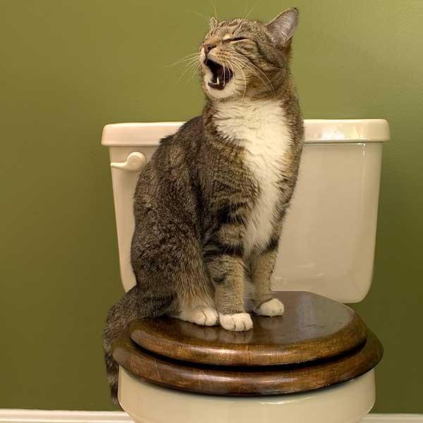 cistite e stress nel gatto