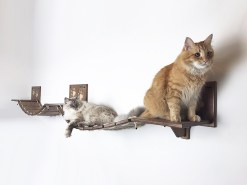 Passerella per gatti
