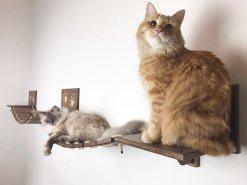 Ponte per gatti doppio