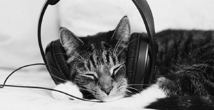 gatto cuffia musica
