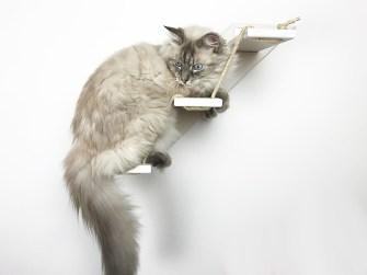 Scaletta per gatti bianca