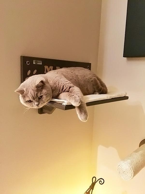 Mensola per gatti con Margot