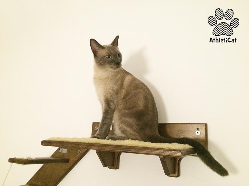Parete attrezzata per gatti in legno