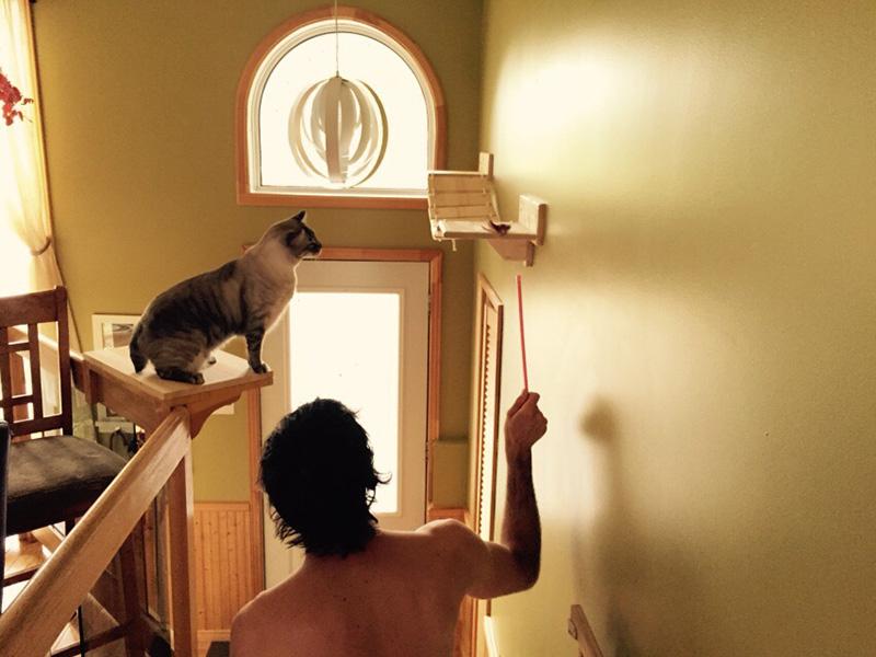 Ponte per gatti con Pogo