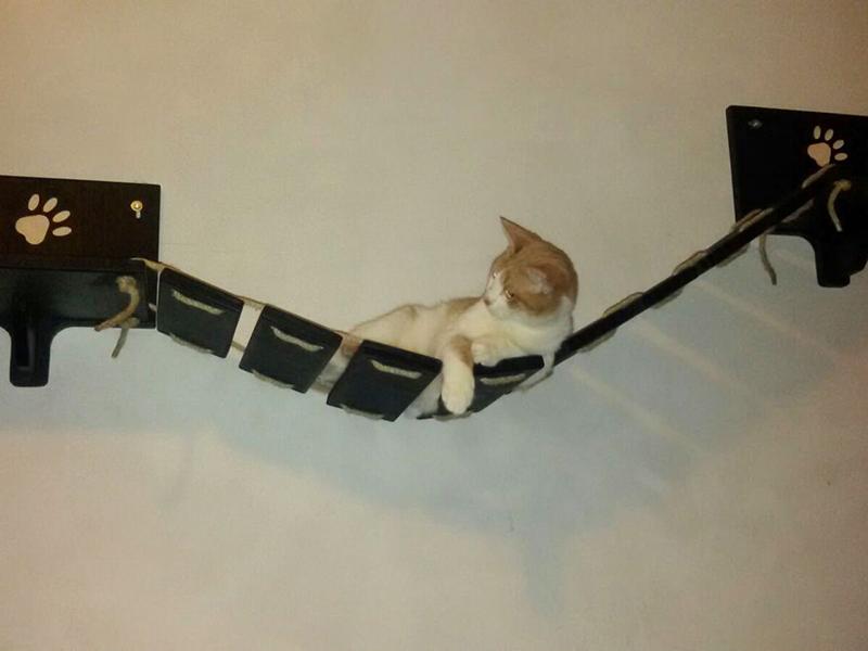 Ponte per gatti con Zenzero