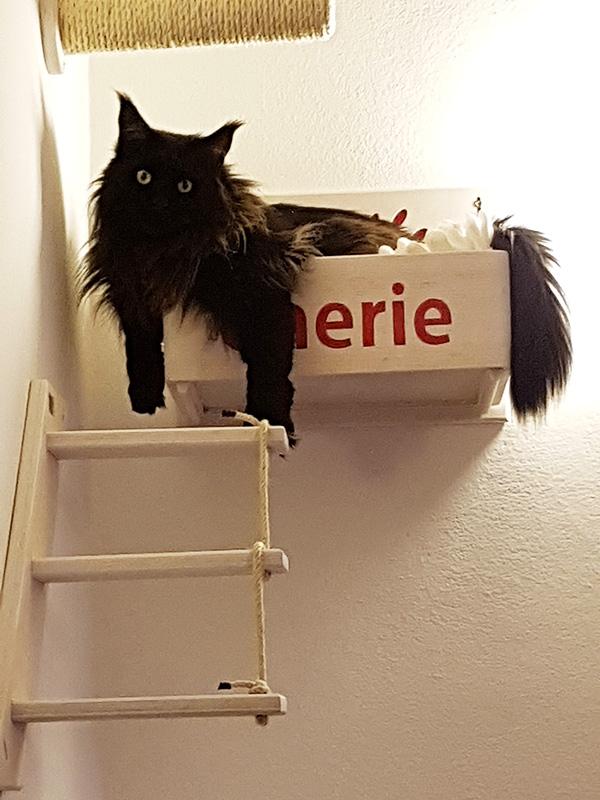 Palestra per gatti con Cherie