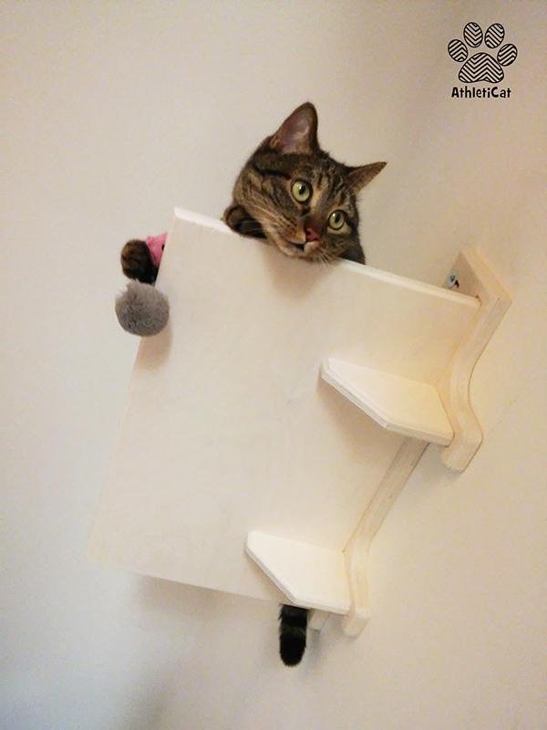 Parete attrezzata per gatti