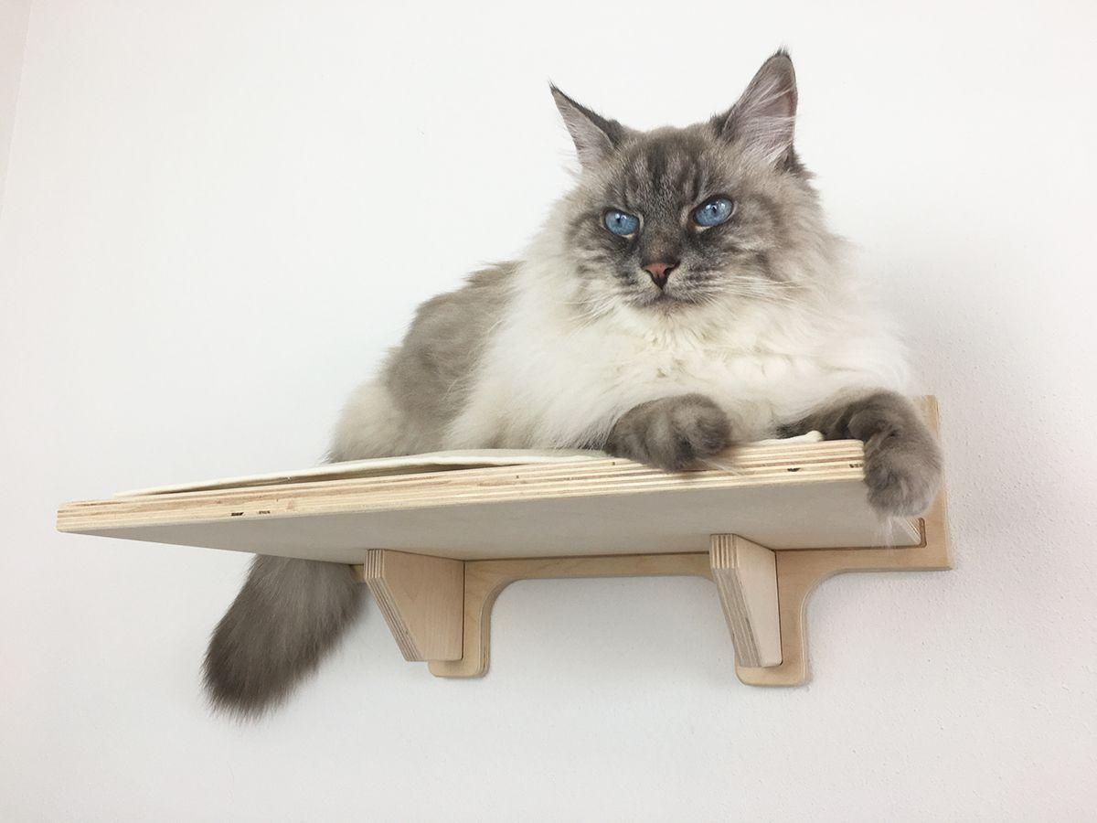 Costruire Lettiera Per Gatti mensola per gatti artigianale, riverstita con morbido tessuto -  athleticat.it