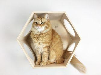 Esagono cuccia per gatti