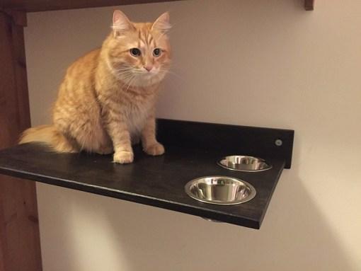 Cat shelf with bowls