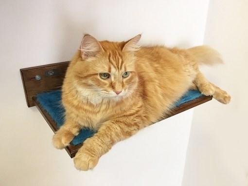 Cat shelf with peluche fabric
