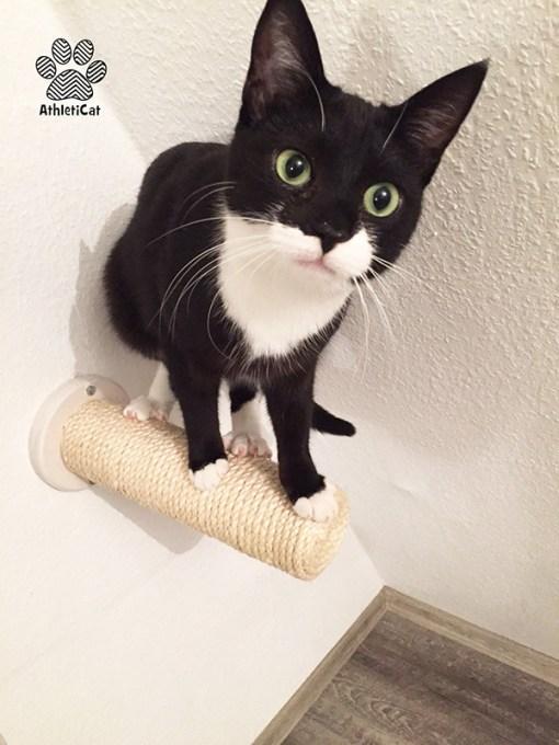 Wall mounted cat scratcher