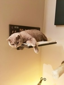 Margot cat shelf