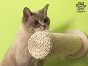 wall cat scratcher