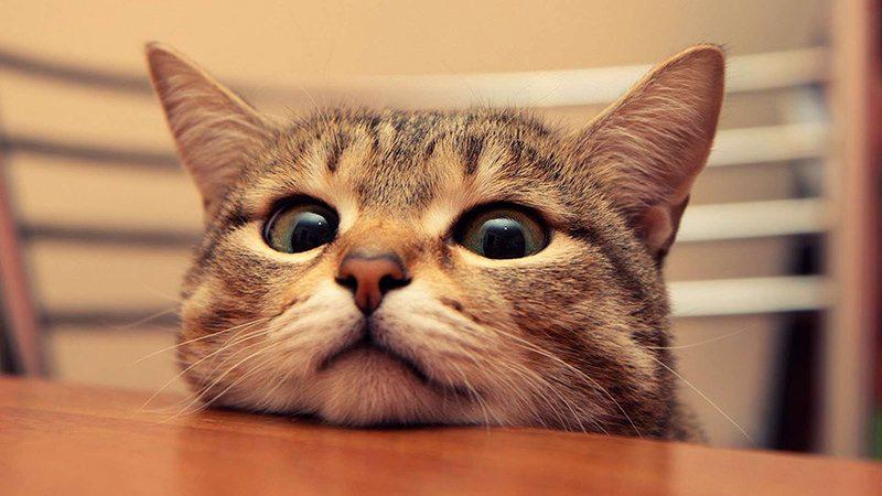 cat behaviour curious