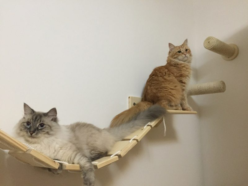 cat gym bridge