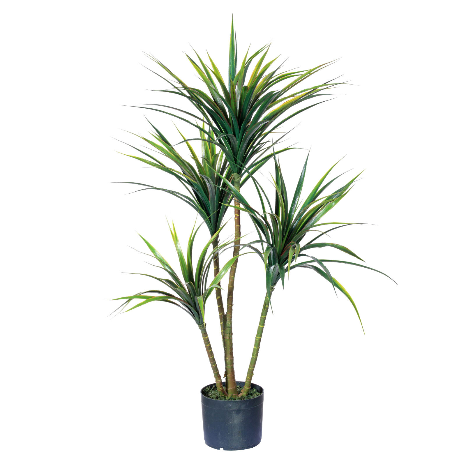 farmhouse glam living room door designs in india yucca plant plastic pot | at home
