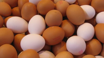 chickens eggs
