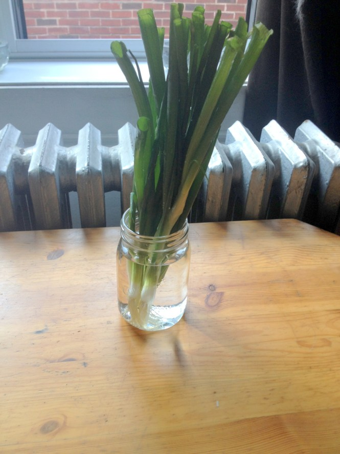 how to grow onions from seed indoors