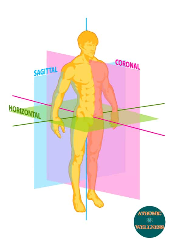 La posture peut être analysée selon les différents plans anatomiques