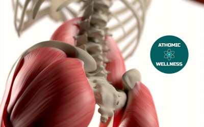 Zoom sur les Fessiers – Fonction et Déficit Musculaire