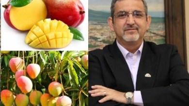 Como estado productor de mango, ocupamos el quinto lugar con una producción del fruto de 145 mil toneladas: Huergo Maurin