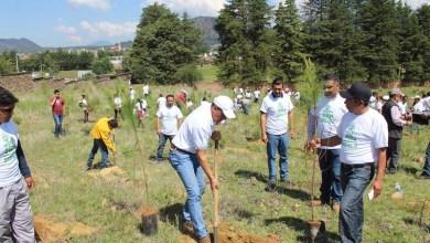 Este año Sigala Páez anunció la meta es plantar más de 250 mil árboles en diversos municipios del estado