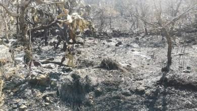 incendio, Cerro del Punhuato
