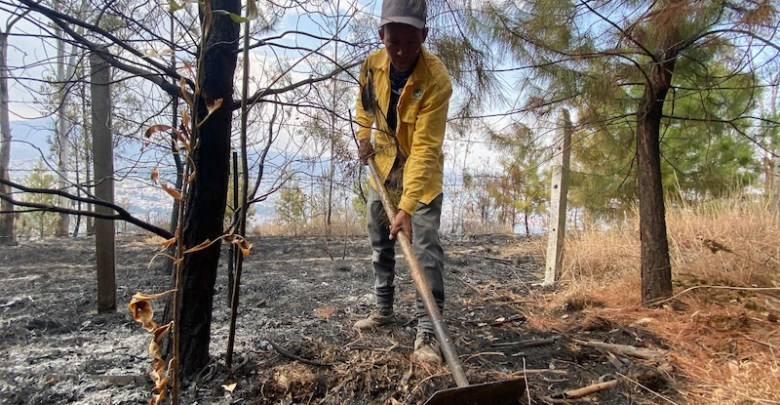incendio forestal, brigadista