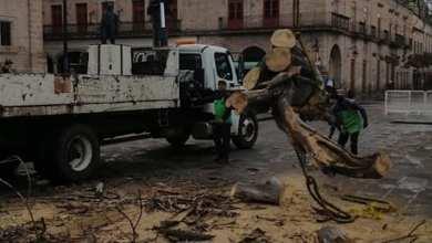 árbol caído, Centro Histórico de Morelia