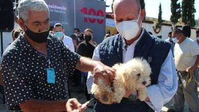 Vacunación antirrábica en Zitácuaro