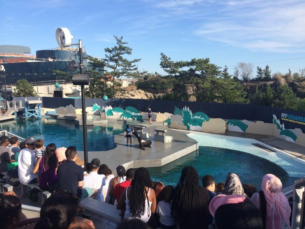 ny aquarium seal show