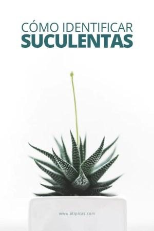 Identificar-suculentas-Pinterest