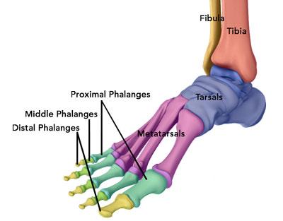 Hand Diagram Ligaments Ankle Injury Treatment Atlanta Ga Ankle Arthroscopy