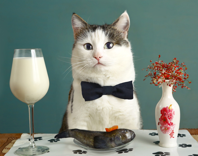 Food Restaurants Using Cats