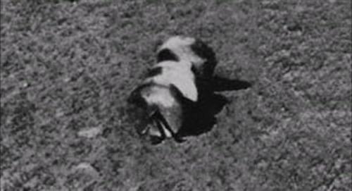 Foto Rusia di Bulan Pada Tahun1966