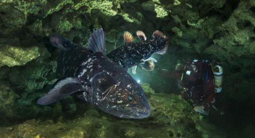 """Hilang 400 Juta Tahun Lalu, Ikan """"Raja Laut"""" …"""