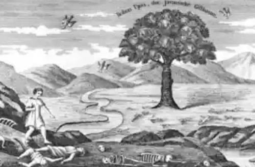 Mengupas Mitos Pohon Upas. …