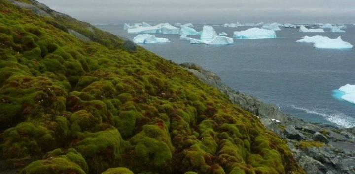 Perubahan Iklim Bikin Antartika Hijau Lagi seperti …