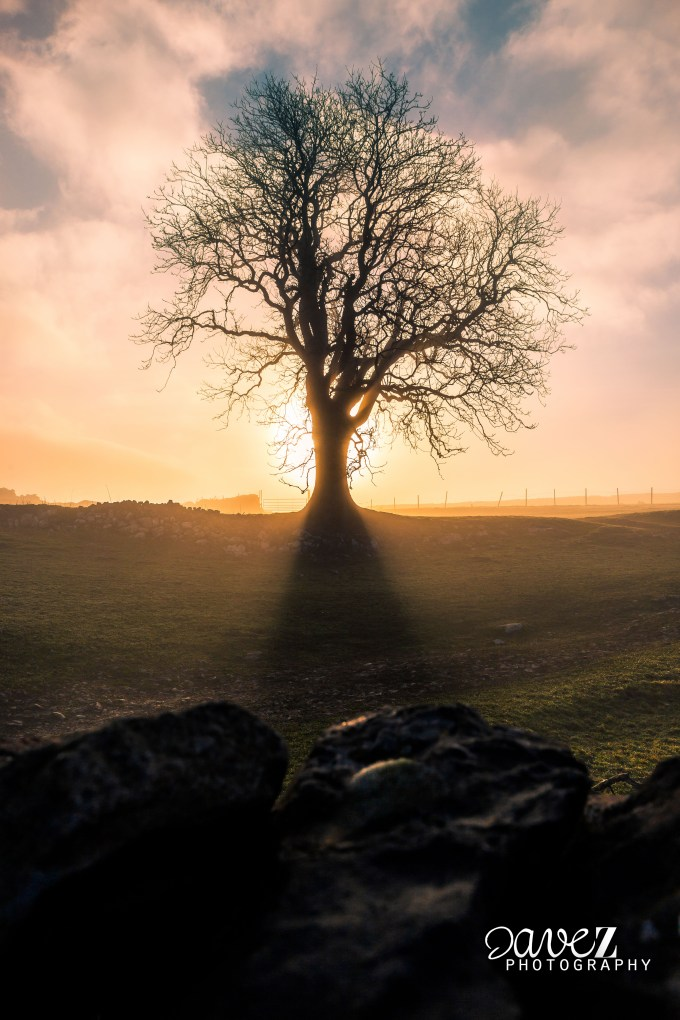 Behind Tree (Malham) -1