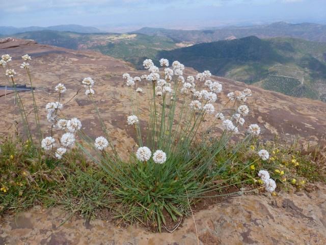 Timenkar-Sidi Belqas