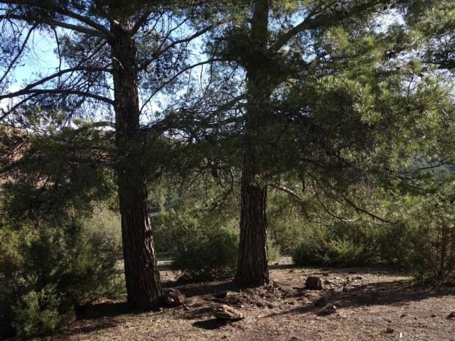 La forêt touristique