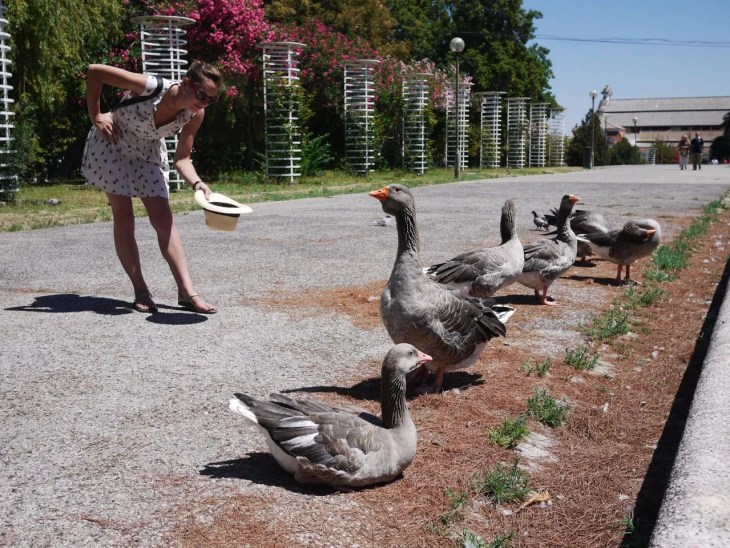 geese at marque Ed. 7