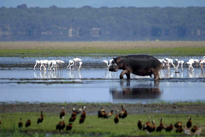 iSimangaliso Wetland Park Adds Forest Loop