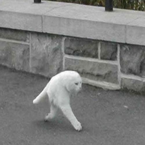 Gato humanoide