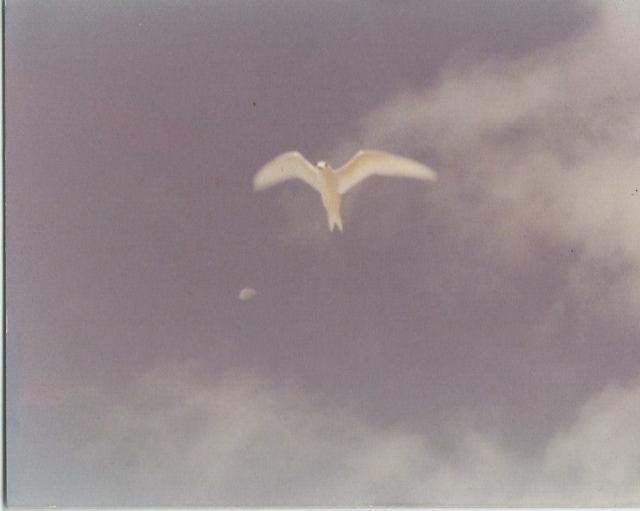 james-androl-bird