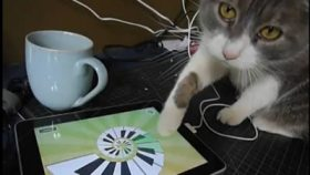 Iggy the iPad cat