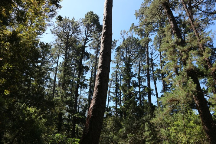 newlands-forest-cape-town