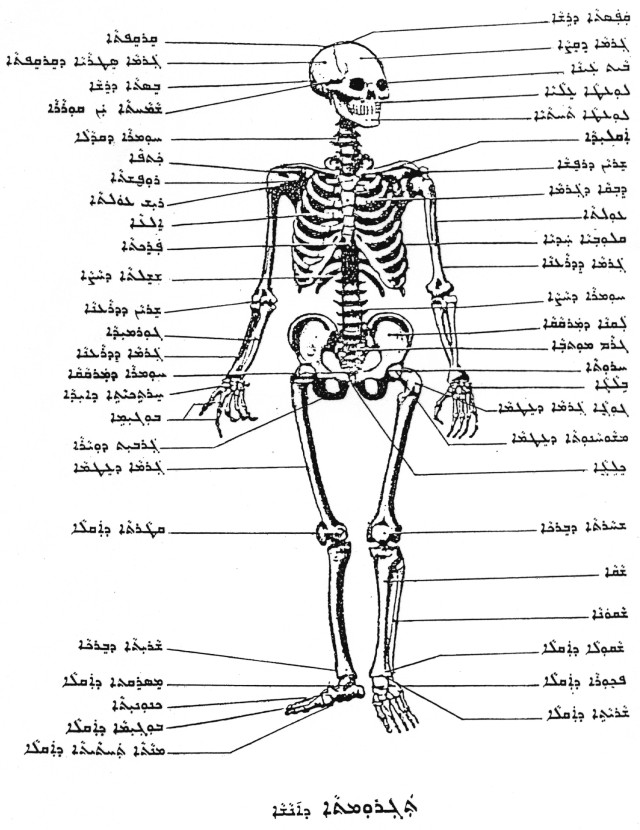 "Gabriel Kenoun: ""Medicine and Human Anatomy"" and ""Geometry"