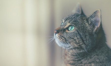 Essay on Cat in English For School Kids & Students